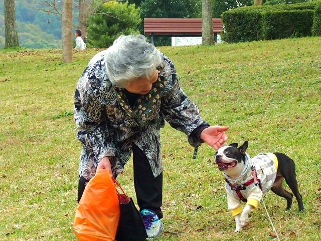犬を預けることができる老犬ホーム